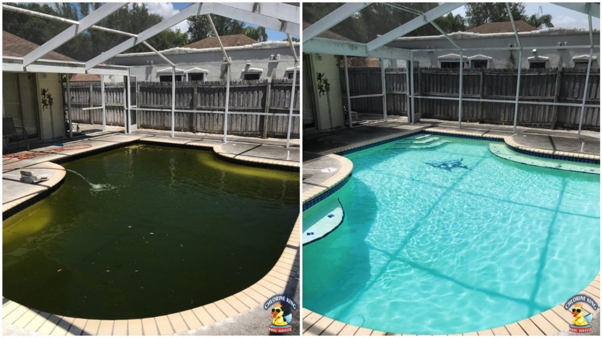 Green Pool How To Clean Up Chlorine King Pool Service